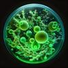 Freeesh (AppStore Link)
