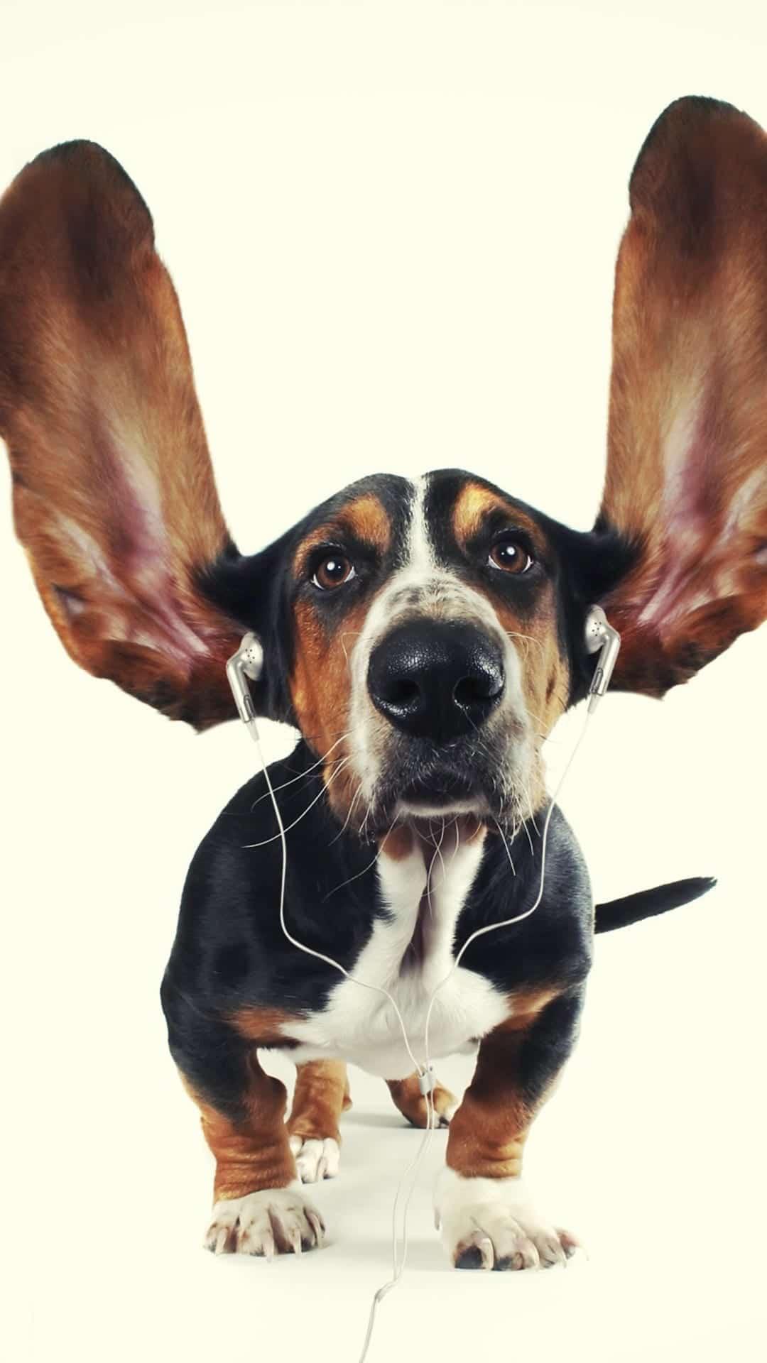 Versiculos De La Biblia De Animo: Fondos De Pantalla De Animales Para IPhone