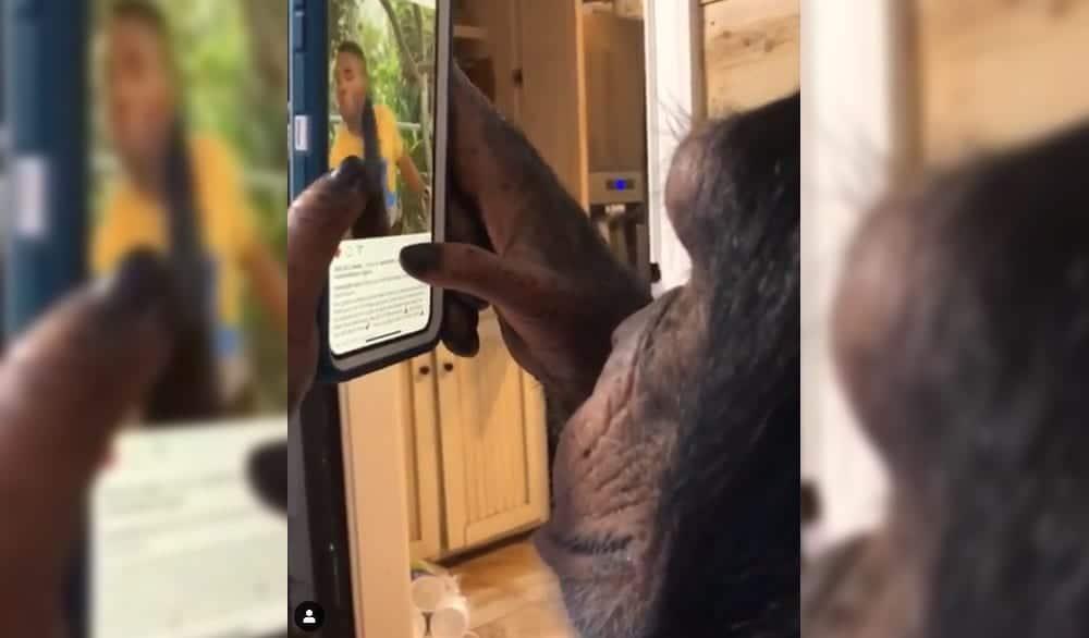 Chimpace Instagram con iPhone