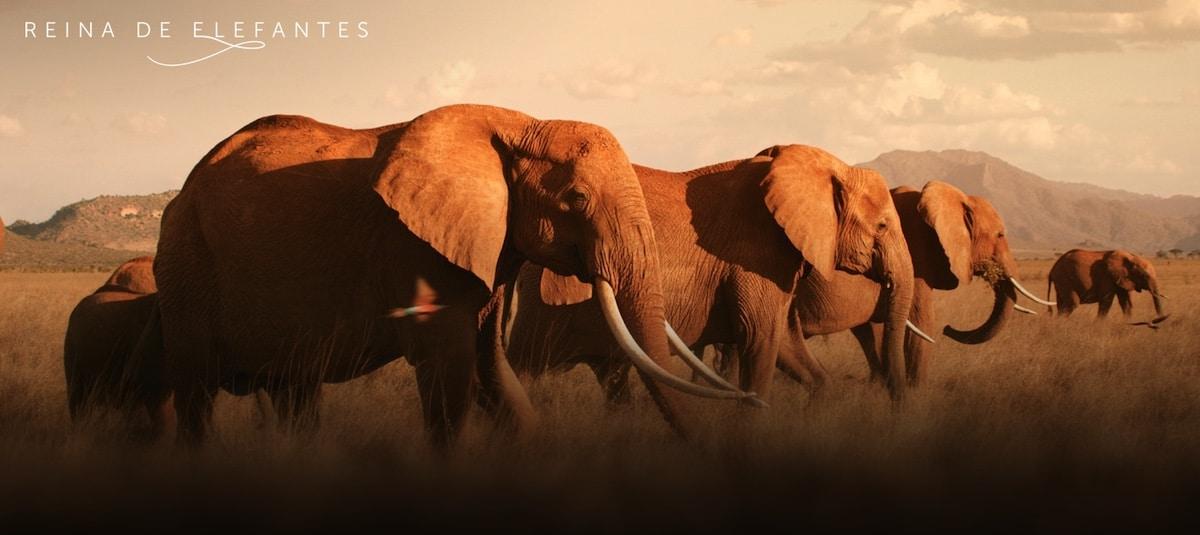 reina de elefantes